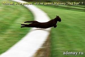 К чему снится кошка трехшерстная